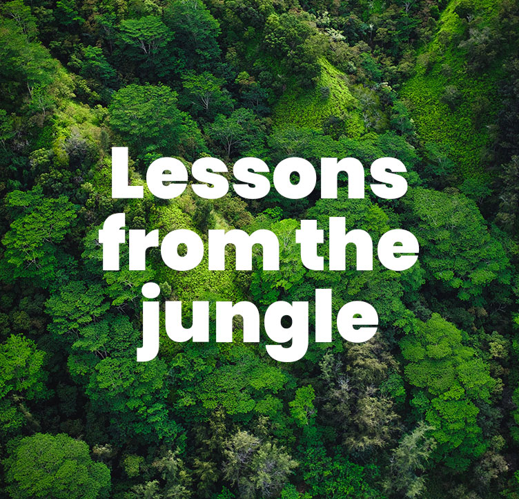 Lessons from the jungle